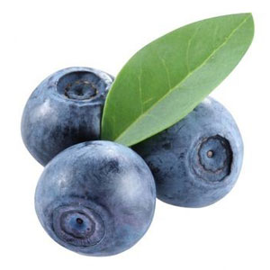 Fruit Game Option - Bilberry